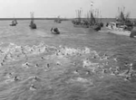 Eleventh national 2km swimming contest across the Wadden Sea