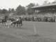 Harness races
